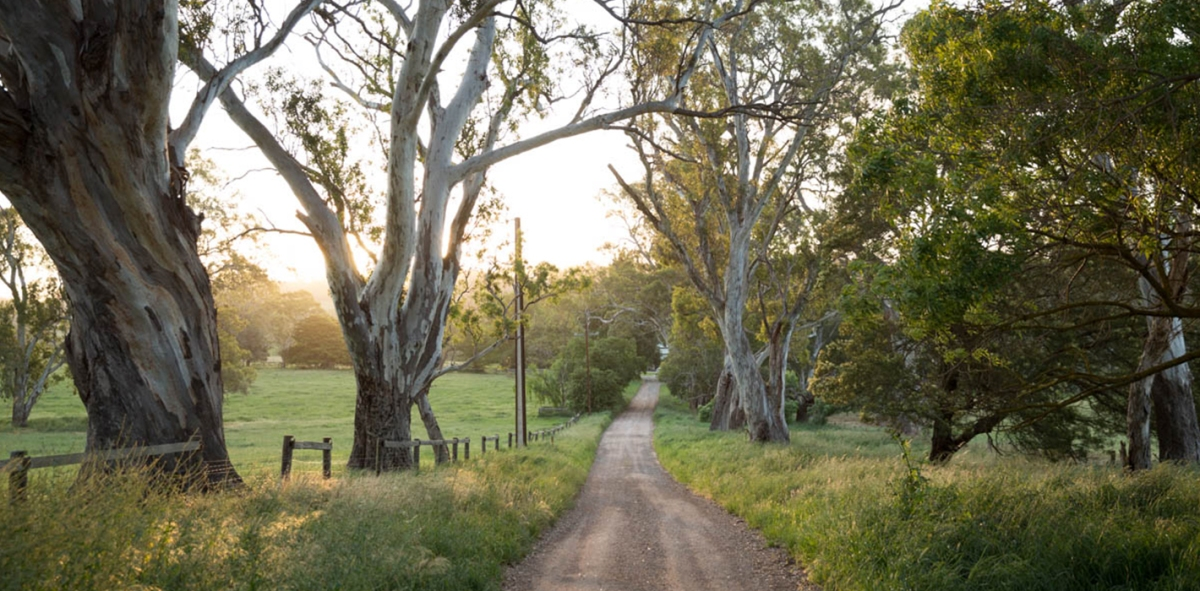 SA Listings Sales Team partners with Newenham Adelaide Hills